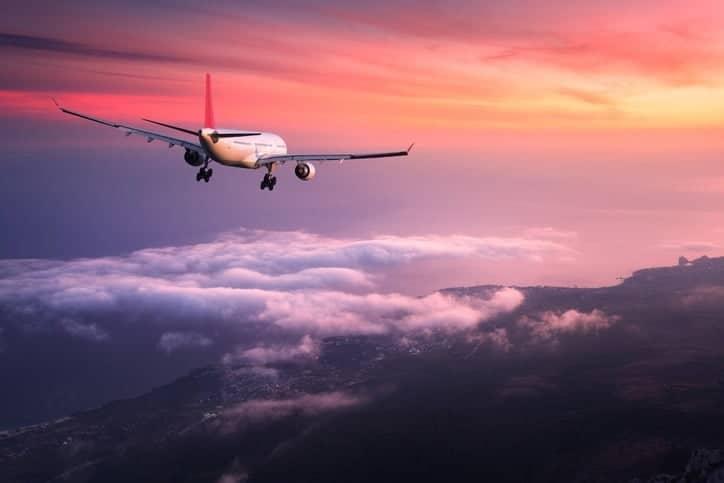 Beautiful Companion Flight