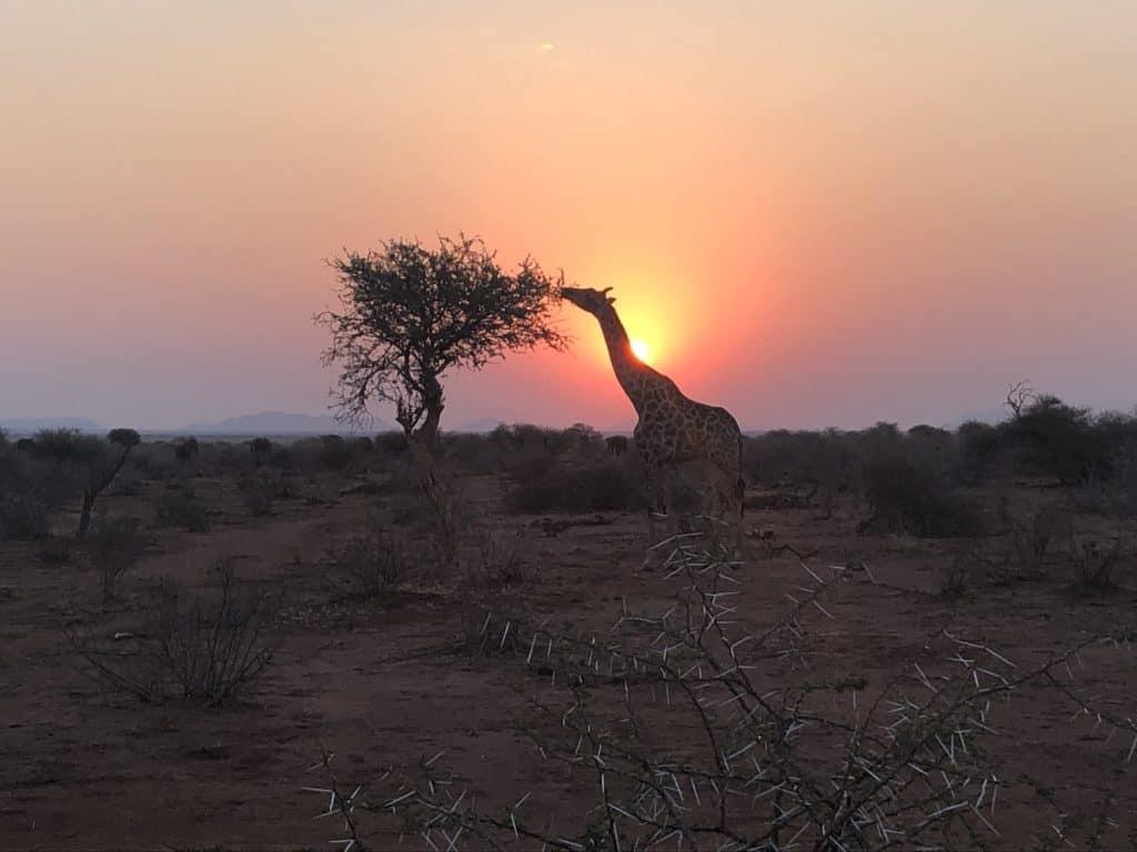 Makanyane Safari Review