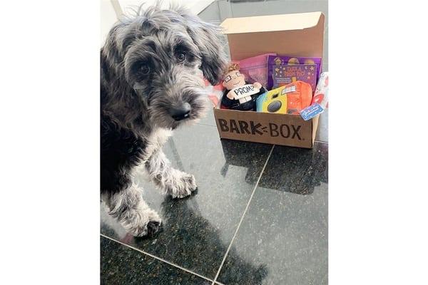 BarkBox subscription box for dog parents