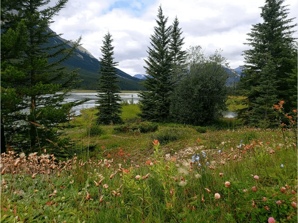 Bow Lake with flowers