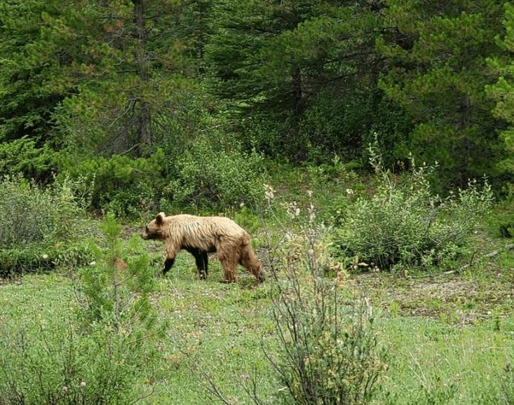 Wildlife banff