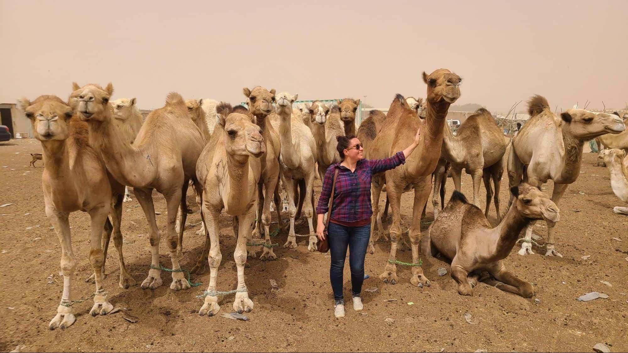 camel market near Nouakchott, Mauritania